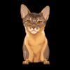Abyssinian Cat 1