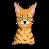 African Cat 1