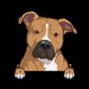 American Pit Bull Terrier Brown