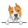 American Staffordshire Terrier Gold