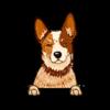 Australian Cattle Dog (Heeler) Red