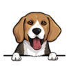 Beagle Blue Tan White