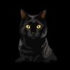 Bombay Cat 1