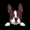Boston Terrier (Red)