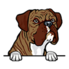 Boxer (Brindle)