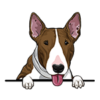 Bull Terrier (Brindle)