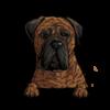 Bullmastiff (Brindle)