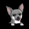 Chihuahua (Blue)