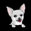 Chihuahua (White)