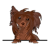 Chinese Crested Dog (Red)