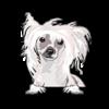 Chinese Crested Dog (White)