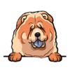 Chow Chow (Red)