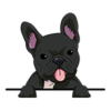 French Bulldog (Frenchie) Black