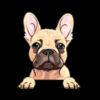 French Bulldog (Frenchie) Cream