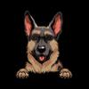 German Shepherd (Brown)