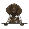 German Shorthair Pointer (Liver White Patched Ticked)