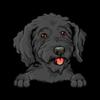 Goldendoodle (Black)