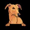 Greyhound (Brown)