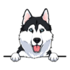 Husky (Black White)