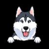 Husky (Grey White)