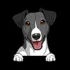 Jack Russell Terrier (Black White)