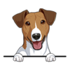 Jack Russell Terrier (Brown White)
