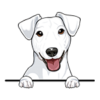 Jack Russell Terrier (White)