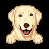 Labrador Retriever (Golden)