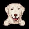 Labrador Retriever (Silver)
