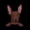 Mexican Hairless Dog (Xolo)