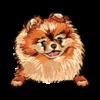 Pomeranian (Red)