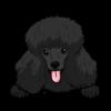 Poodle (Black)