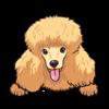 Poodle (Yellow)