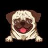 Pug (Yellow)
