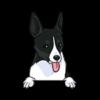 Rat Terrier (Black White)