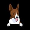 Rat Terrier (Red White)