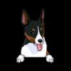 Rat Terrier (Tricolor)