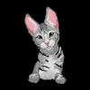 Savannah Cat 2