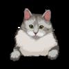 Siberian Cat 1