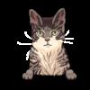 Singapura Cat 1