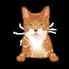 Singapura Cat 2