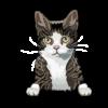 Singapura Cat 3