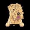 Soft Coated Wheaten Terrier (Wheaton)