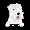 Soft Coated Wheaten Terrier (White)