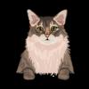 Somali Cat 4