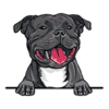 Staffordshire Bull Terrier (Black)