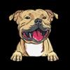 Staffordshire Bull Terrier (Yellow)