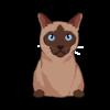Tokinese Cat 1