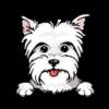 Yorkshire Terrier (White)